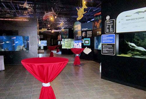 Florida Beach Wedding With Aquarium Reception: Florida Beach Wedding With Aquarium Reception