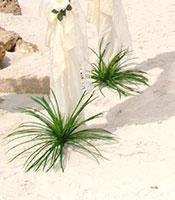 Grassy Dune Sprays