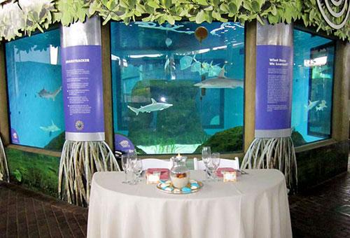 Mother of Pearl Beach & Aquarium