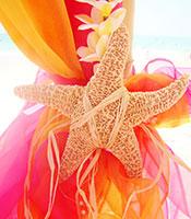 Sugar Starfish Tiebacks