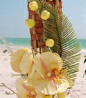 Tiki Yellow Plumeria
