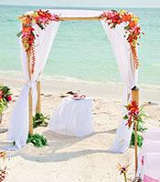 Tropical Hawaiian Canopy